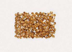 Семена алтея лекарственного