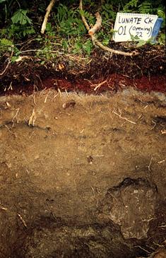 Структура подзолистой почвы