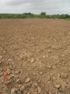 Солонцеватая почва
