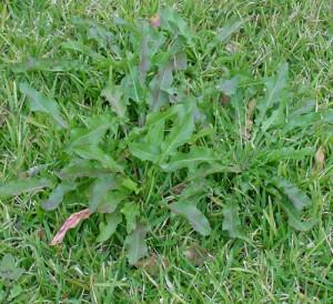 Дерн, трава