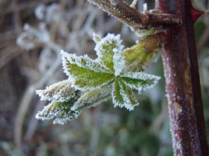 Весенние заморозки