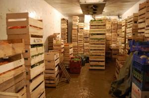 Складирование и хранение овощей