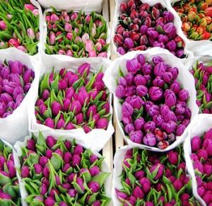 Тюльпаны различных сортов