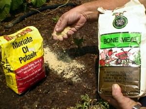 Минеральные и органические удобрения