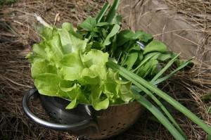 Огородная зелень
