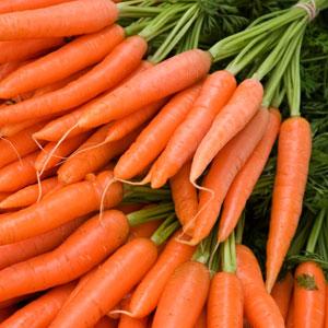 Зимние посевы моркови