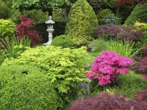 Кусты в саду