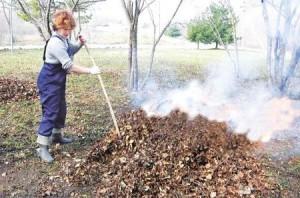 Уборка и сжигание опавшей листвы