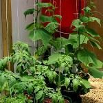 Выращивание огурцов методом гидропоники