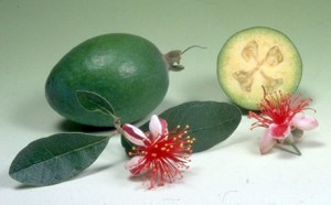 Плод фейхоа и цветок