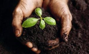 Плодородный слой почвы