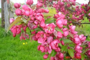 Весеннее цветение деревьев