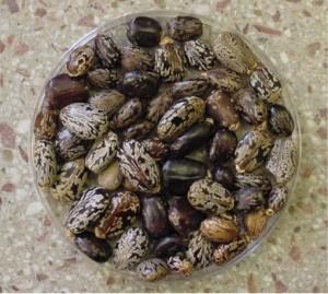 Различные сорта фасоли