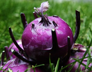 Плод кольраби