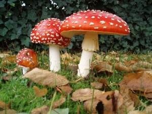 Грибы подраздел ядовитые грибы как