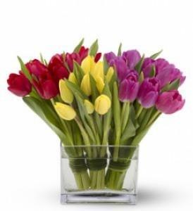 Тюльпаны для цветоводов
