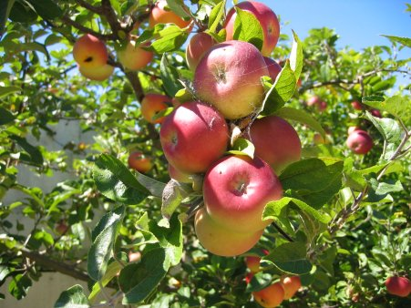 Садоводческие товарищества Карелии в 2011 году будут получать бюджетные...
