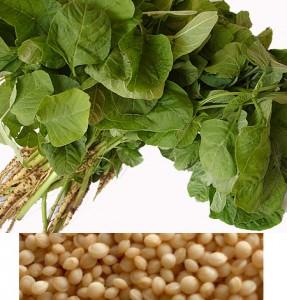 Листья и семена амаранта