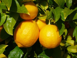 Лимон в огороде