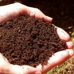 Кислотность почвы участка