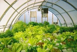 Теплица с экзотическими растениями
